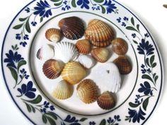 Scallop Sea Shell Crafts Supplies Amber Pink by MosaicMargalita, $4.50