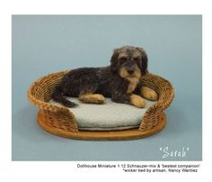 "Kerri Pajutee Miniature Animals ~ ""Sarah"" Schnauzer-mix & 'bestest companion' wicker bed by Artisan Nancy Wantiez"