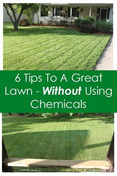 6 tips to a great lawn without using chemicals