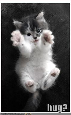 Hug? If somebody tossed that little kitty up in the air just to get a cute pix this will be on my angry board