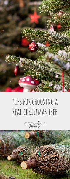 Tips on how to choose the perfect real Christmas tree, includingwhat to look out for, what to avoid, and popular varieties.