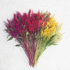 Celosia, Spike - green, orange, red, salmon, purple *not our photo