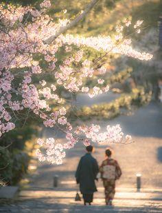 Blossoms and kimono