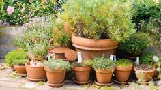 Repot indoor and outdoor plants at the beginning of spring to give them a new lease of life.