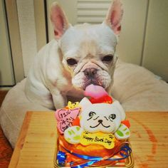 """Happy Birthday!"", French Bulldog with a matching Cake♥"