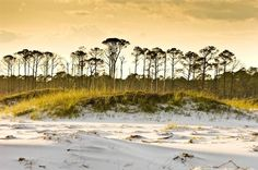 Topsail Hill Preserve State Park | SoWal.com - Insider's Guide for South Walton Beaches & Scenic 30A