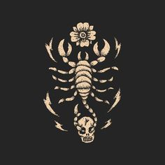 Scorpion Illustration
