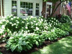 hydrangea landscaping 43 Excellent Shade Garden Design Ideas - Page 36 of 45 Hydrangea Landscaping, Front Yard Landscaping, Shade Landscaping, Outdoor Landscaping, Southern Landscaping, Acreage Landscaping, Landscaping Tips, Backyard Shade, Shade Garden