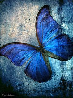 Blue Butterfly on Pinterest | Blue Morpho, Beautiful Butterflies ...