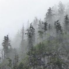 Im Geisterwald