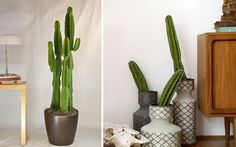 | Ideas para decorar con cactus