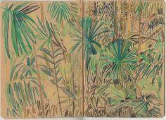 Susie Wright | Queensland studies