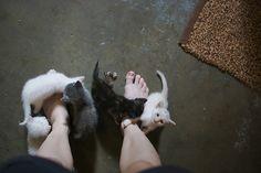 ラブリー-KittyCats、ilovecatsok:Flickrでlaurenmarekによってギャング。