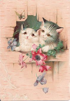 Sweet Kittens  ~~   Victorian Trade Cards from Sellers, Medlar & Bachman, Clothing House, Reading, Pa
