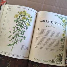 Secrets des Plantes Sorcières | Fées, elfes, lutins | Peuple Féerique - Le Petit Monde de Richard Ely