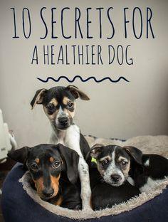 10 Secrets for a Hea