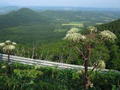 Angelica ursina Seeds, Japan, Mountains, Nature, Travel, Naturaleza, Viajes, Destinations, Traveling