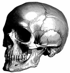 Human Anatomy the human skull Old medical atlas by mapsandposters