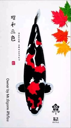 Koi Art, Fish Art, Japanese Koi, Japanese Culture, Koi Fish Pond, Koi Ponds, Koi Wallpaper, Koi Fish Colors, Koi Fish Designs