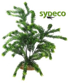 SYDECO Nature Collection Aqua Flora Aquarium Sea Pearl Fern