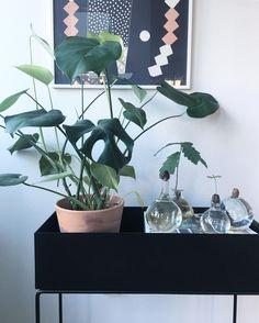 ferm LIVING Plant Box in black: https://www.fermliving.com/search.aspx?q=Plant+Box