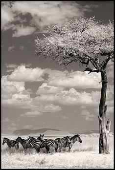 Pictures taken across Africa and Asia by John Kenny. S)