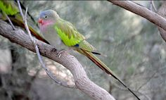 Pretty Birds, Parrot, Princess, Ranges, Searching, Animals, River, Photos, Parrot Bird