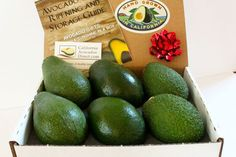 Holiday Sampler Gift Box with 2 Fuerte avocados, 2 Bacon avocados, 2 Hass avocados...all grown on our family farm...not available in stores!