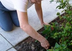 Seniors love to be engaged in therapeutic horticultural acitivies