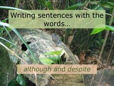 This presentation guides students through the process of using the words although and despite to combine sentences.