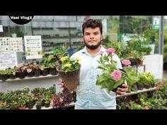 Flower Plant Nursery Visit In Kerala   Variety Plant Pots   Chungath Garden&Nursery Panayi  VasiVlog - YouTube Garden Nursery, Plant Nursery, Plant Pots, Potted Plants, Garden Online, Outdoor Plants, Kerala, Planting Flowers, Youtube