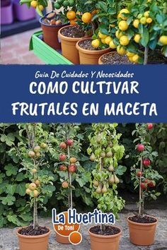 140 Ideas De Arboles Frutales En Masetas Cultivo De Plantas Jardín De Productos Comestibles Jardineria Y Plantas