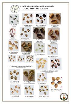 Clasificación de defectos físicos del café según SCAA #CreandoCulturaCafetera