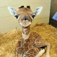 Baby giraffe......so cute