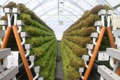 Hydroponic gardening or hydroponics is the science of growing plants using only nutrient-rich liquid as a soil replacement. Learn about hydroponics here. Indoor Aquaponics, Hydroponic Farming, Hydroponic Growing, Aquaponics Fish, Hydroponics System, Growing Plants, Aquaponics Greenhouse, Vertical Farming, Small Space Gardening