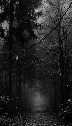 Creepy fog, black and white landscape, magic forest, dark beauty, dark wood Night Aesthetic, Gothic Aesthetic, Creepy Fog, Foto 3d, Dark Landscape, Slytherin Aesthetic, Dark Pictures, Black Aesthetic Wallpaper, Black And White Aesthetic