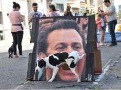 Funny Dog Pees On a Street Poster