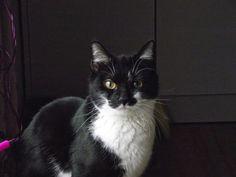 Un Oeil Sur Tout: [Vidéo du Jour] - Ce chat pourrait obtenir la méda...