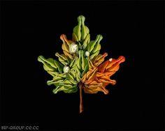 Maple leaf?...
