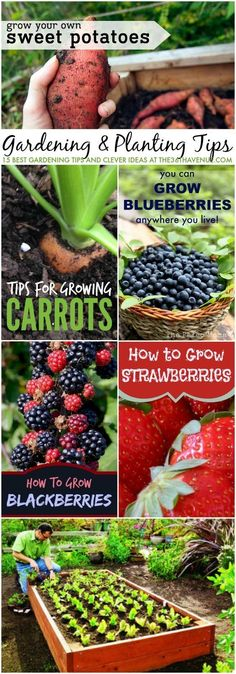 Gardening - 15 Gardening Tips and Clever Ideas at http://the36thavenue.com Pin it now…