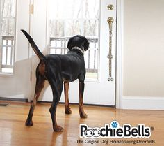 From A Dog Trainer – How To Teach My Dog To Tell Me When He Needs To Go to the toilet