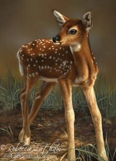 First Steps - Whitetail Fawn