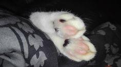 #lazy #cat #animal #mylove #mylittlebaby #beauty