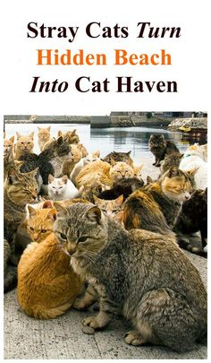 Stray cats turn hidden beach into cat haven. Read more http://www.traveling-cats.com/2016/08/cats-from-hermigua-la-gomera.html (hidden beaches Europe, hidden beaches Spain, hidden beaches, Canary Islands, cat haven, cats, La Gomera tips, La Gomera kids, La Gomera national parks, Canary Islands beaches, Canary Islands hiking)