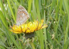 Butterfly of the June, 15. Photo 2. by varvarajdanova.deviantart.com on @deviantART