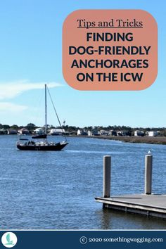 Many anchorages along the ICW don't work if you need to take your dog off the boat. Here's how to find the ones that will. Dogs On Boats, Great Places To Travel, Edisto Island, Living On A Boat, Boat Safety, Dog List, Kinds Of Dogs, Pet Travel