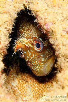 Underwater world - Onder water wereld Life Under The Sea, Under The Ocean, Sea And Ocean, Underwater Creatures, Underwater Life, Ocean Creatures, Orcas, Regard Animal, Fauna Marina
