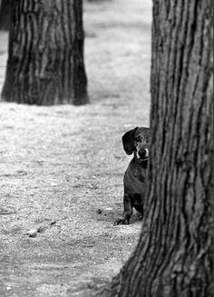 Medio perro tras medio árbol de Elliott Erwitt.