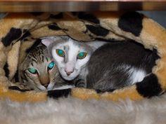 Amira und Riylah