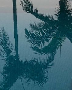 Day Lewis, Bel Air, Palm Trees, Sustainability, Summertime, Ocean, Mountains, Night, Wallpaper